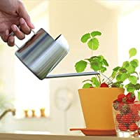 Lypum Mini Stainless Steel Watering Can, Tiny Metal Watering Can with Long Narrow Spout for Home and Office Plants