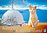 Katzen in Griechenland (Wandkalender 2019 DIN A2 quer): Katzen im Urlaub liegen in der Sonne, dösen im Lokal, schmusen am Strand (Monatskalender, 14 Seiten) (CALVENDO Tiere)