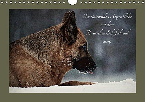 Faszinierende Augenblicke mit dem Deutschen Schäferhund (Wandkalender 2019 DIN A4 quer): Noch immer verzaubert der Deutsche Schäferhund den Menschen ... (Monatskalender, 14 Seiten ) (CALVENDO Tiere)