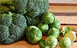 Seedscare Broccoli and Brussels Paper Sprouts Seeds Combo -2 Packet x 30