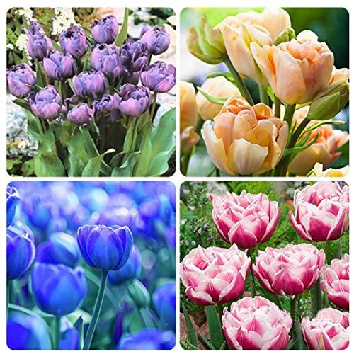 Ultrey Samenshop - 100 stück Tulpen Samen Bunte Blumensamen Bonsai Tulpen Gartenpflanzen Gartenblumen Samen Winterhart Mehrjährig für Garten Balkon/Terrasse