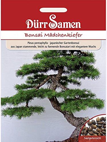 Dürr-Samen D1893