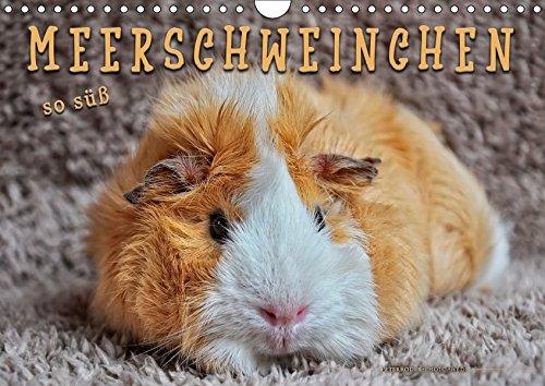 Meerschweinchen - so süß (Wandkalender 2019 DIN A4 quer): Eindrucksvolle Bilder der niedlichen...