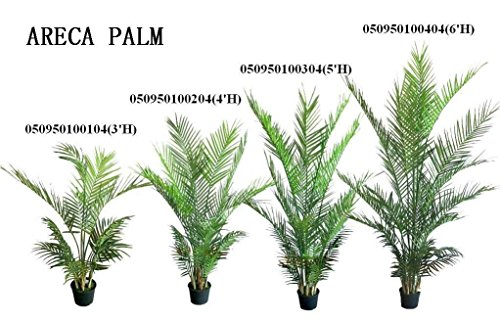 40-45-cm-areca-butterfly-palm-dypsis-lutescens-tree