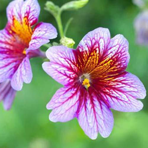 5000 STÜCKE Vogel Und Schmetterling Form Wilde Blume Garten Mix Samen - Für Samen Vögel Die