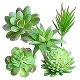 WINOMO Mini Plantas Suculentas Artificiales Decoración para Oficina Jardín Mesa Casa 5 Piezas