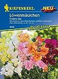 Kiepenkerl Antirrhinum majus (Löwenmäulchen Twinny Mix) 0-0cm / 1 Packung (Blumenzwiebeln, Sommerblüher (Aussaat im...