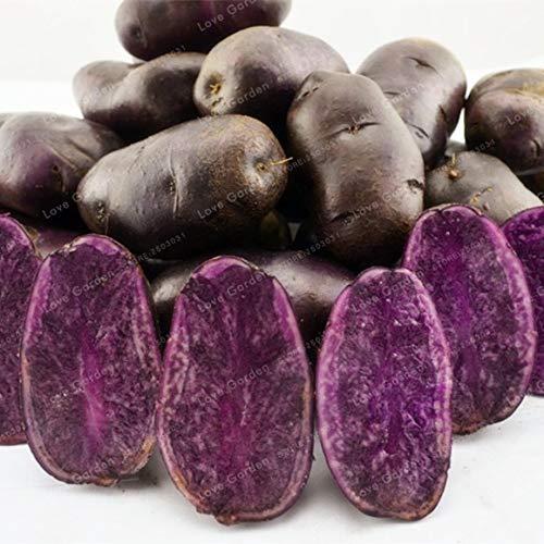 Bloom Green Co. 100 Pcs Pommes de Terre Pourpre Bonsai Pourpre de patates Douces Dã©Licieux Nutrition Bonsai Accueil Lã©Gumes Green Garden NO OGM