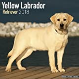 Yellow Labrador Retriever Calendar 2018 (Square)