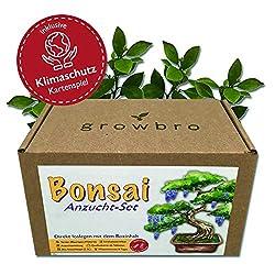 Bonsai - growbro - Wisteria Anzuchtset inkl. Klima-Karten, Züchte deinen eigenen Bonsai-Bro, Geschenke für Frauen und Männer, Bonsai Starter Kit inkl. Samen, Sprühflasche, uvm.