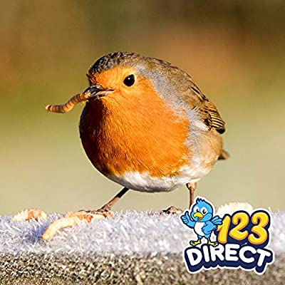 2KG Dried Mealworms for Wild Bird Food by 123