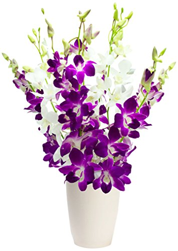 eden4flowers-postal-45-manilla-orchids-birthday-flowers-thank-you-and-anniversary-bouquet-purple