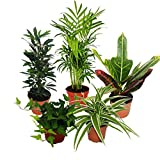 Mini Indoor Plant Mix - Set of 5 - Best Reviews Guide