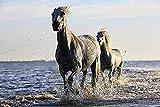 Puzzel Für Erwachsene 1500 Teile 2 Pferde Rennen Am Meer Wohnkultur Gemälde, Plakate