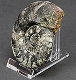 Safe 10 Acryl Tellerständer Tellerhalter auch für Mieneralie Achatscheiben und Münzen Länge 70mm x Breite 40 mm Höhe 50 mm