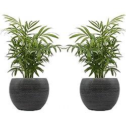 """Zimmerpalmen-Duo mit handgefertigtem Keramik-Blumentopf """"Cresto Eisblau"""" - 2 Pflanzen und 2 Dekotöpfe"""