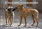 STRASSENVAGABUNDEN (Wandkalender 2019 DIN A2 quer): Straßenhunde in Ecuador (Monatskalender, 14 Seiten ) (CALVENDO Orte)