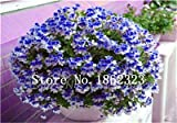 ShopMeeko SEEDS: 50 PC-Mul-Farbe Seltene Bonsai Pflanze Pelargonium Peltatum Sämling Innenräume für Hausgarten: 19