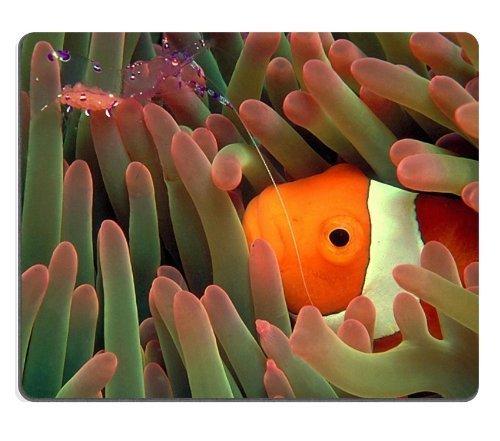 """Animale Pesce Corallo Anemone Mare in Wildlife Mouse Pad personalizzato, per sostegno Ready 97/8inch (250mm) X 7/8(200mm) X 1/16""""(2mm) panno ecologico di alta qualità con gomma neoprene Luxlady Mouse Pad Mouse Desktop Laptop Mousepad Tappetino per il mouse comodo cute Gaming Mouse Pad"""