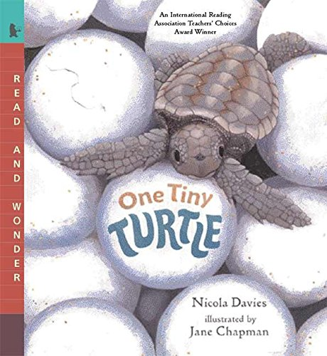 One Tiny Turtle: Read and Wonder por Nicola Davies