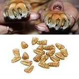 Zhou-Animalerie, 20PCS Decorative Glitter Powder Furniture Protezione delle Unghie per Animali Domestici, Taglia: l (per 7,5A 10kg di Animali Domestici)