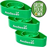 Semi organici: AvoSeedo Bowl Grown la tua Avocado, Evergreen, perfetto Avocado da Farmerly