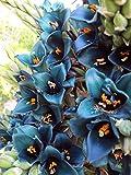 Puya alpestris, aussergewöhnliche Bromelie, 10 Samen