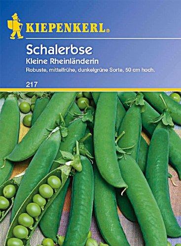 Samen Erbse (Kiepenkerl Schalerbsen Kleine Rheinländerin)