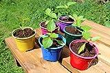 Nutley's Coloured Plant Pots, 9cm (48)