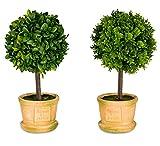 levandeo Buchsbaum 2er Set im Topf H x B: 25x8cm Kunstblume Grün Braun Deko Kunstpflanze