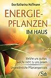 Energiepflanzen im Haus: Welche uns guttun, welche nicht zu uns passen. Ungewöhnliche Pflanzenportraits