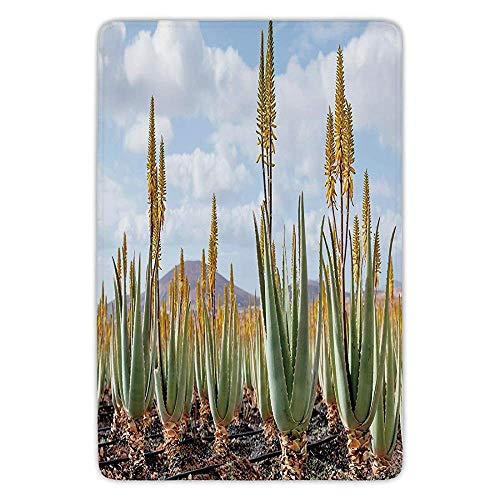 BagsPillow Bathroom Bath Rug Kitchen Floor Mat Carpet,Plant,Photo from Aloe Vera Plantation Medicinal Leaves Remedy Fuerteventura Canary Islands Decorative, Flannel Microfiber Non-Slip Soft Absorbent