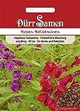 Fleißige Lieschen Rosen-Balsaminen ((Impatiens walleriana)