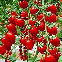 VISTARIC ¡Venta! 50 Semillas de sandía semillas de rábano rojo vegetales, ensalada deliciosa linda, o rábano fruta