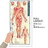 Trigger Points (Quickstudy: Academic)
