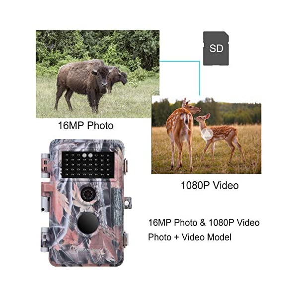 """BlazeVideo 16MP HD Trail Hunting Wildlife Camera, Hunter Scouting Game Camera Motion Sensor Activated Waterproof with Night Vision 40pcs IR LEDs Up to 65ft, Video Record, Snapshot, 2.36"""" LCD Screen"""