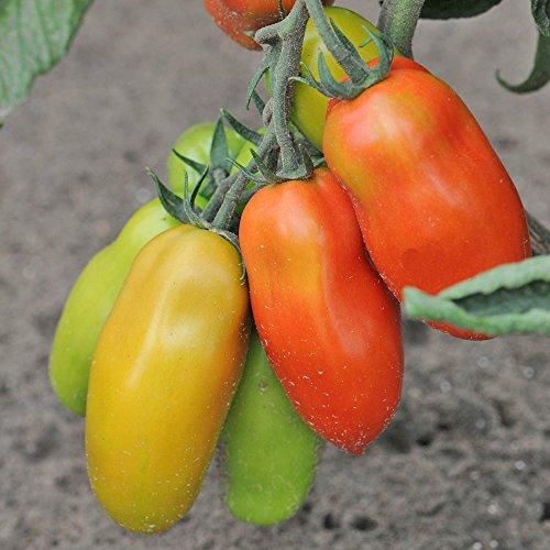 Jardin Express XJ79 6 Prestimottes Tomate F1 Cornabel, Multicolore, 24.5 x 24 x 4.2 cm