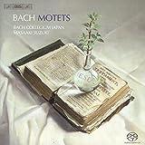 Motetes -Nonoshita