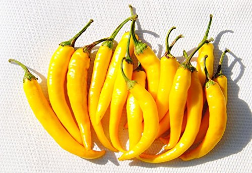 Hungarian fire hot yellow pepper ! nice present! NON GMO, 20 graines