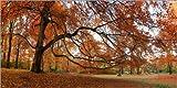Posterlounge Acrylglasbild 180 x 90 cm: Herbstbaum von Frank Herrmann - Wandbild, Acryl Glasbild, Druck auf Acryl Glas Bild