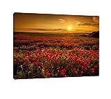 Mohnblütenfeld bei traumhaftem Sonnenuntergang Format: 100x70 auf Leinwand Sonnenuntergang