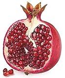 Dr. Jacob's Granatapfel Elixier 500 ml – 25 Portionen, unverfälscht, konzentriert, wenig Zucker - 3
