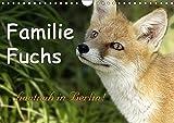 Familie Fuchs hautnah in Berlin (Wandkalender 2018 DIN A4 quer): Füchse in der Stadt leben hautnah mit den dort lebenden Menschen zusammen. ... [Kalender] [Apr 07, 2017] Brinker, Sabine