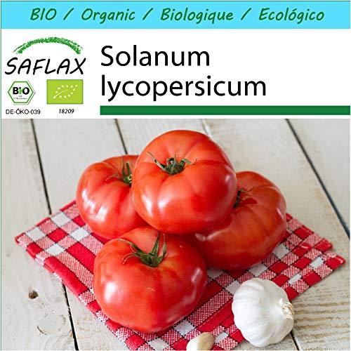 SAFLAX - Geschenk Set - BIO - Tomate - Saint Pierre - 15 Samen - Mit Geschenk- / Versandbox, Versandaufkleber, Geschenkkarte und Anzuchtsubstrat - Solanum lycopersicum