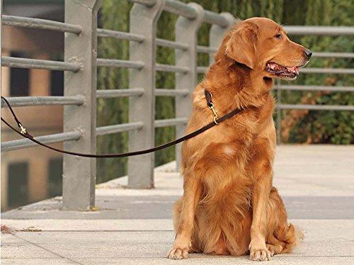 Mani Libere lungo Formazione Guinzaglio in pelle-wandlee Pet Porta Corda per grande/media cani e pups-8-feet