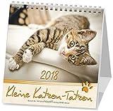 Kleine Katzen-Tatzen 2019: Postkarten-Kalender