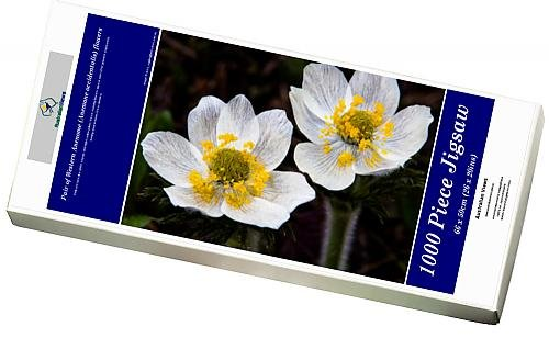 photo-jigsaw-puzzle-of-pair-of-western-anenome-anemone-occidentalis-flowers