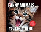 The Punny Animals : The Meme-Ing of Life - Youre Kitten Me!