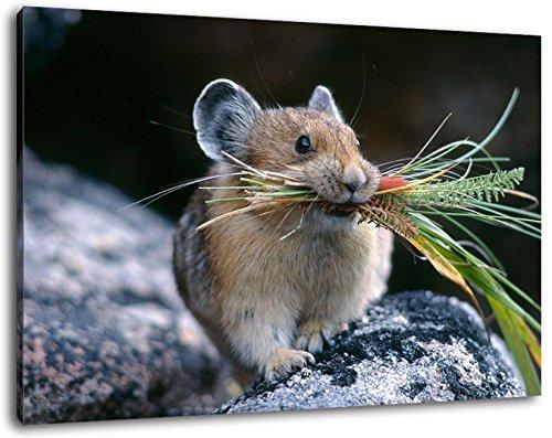 Hamster mit Gras im Mund Format:60x40 cm Bild auf Leinwand bespannt, riesige XXL Bilder komplett und fertig gerahmt mit Keilrahmen, Kunstdruck auf Wand Bild mit Rahmen, günstiger als Gemälde oder Bild, kein Poster oder Plakat