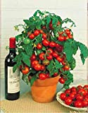 20pcs Kirschtomaten Samen Bonsai Tomaten Samen Essbare Balkon Obst Samen Balkon Gartenpflanze, Gelb/Rot/Lila/Schwarz/Blau mini Tomaten Pflanze